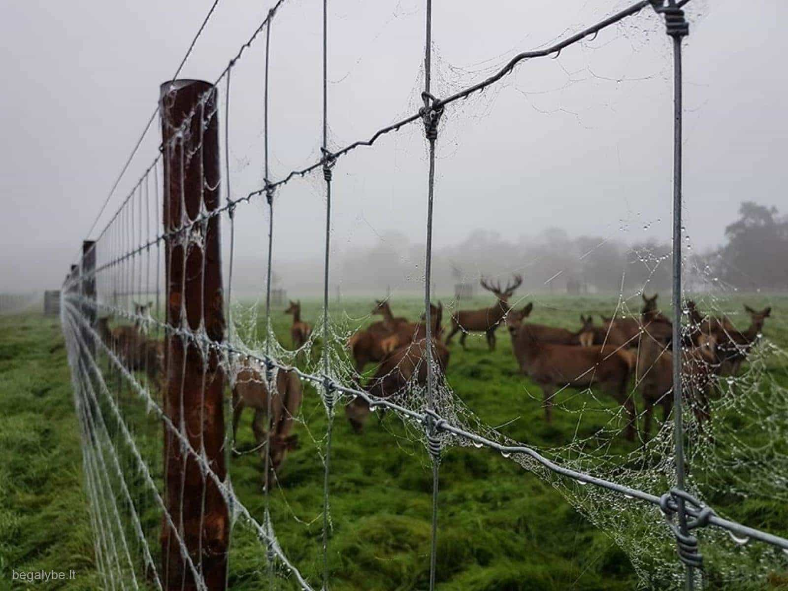 Tornado vielos tinklo tvoros